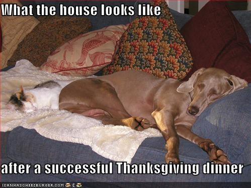 cat,friends,happy thanksgiving,kitteh,sleeping,thanksgiving,thanksgiving dinner,weimaraner