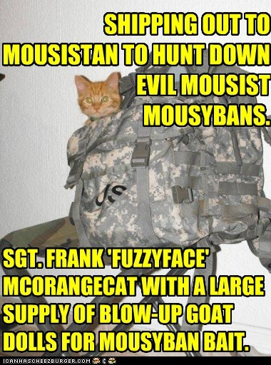 SHIPPING OUT TO MOUSISTAN TO HUNT DOWN EVIL MOUSIST MOUSYBANS. SGT. FRANK 'FUZZYFACE' MCORANGECAT WITH A LARGE SUPPLY OF BLOW-UP GOAT DOLLS FOR MOUSYBAN BAIT.