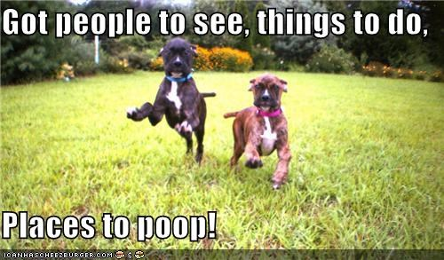 boxer boxers friends grass poop running - 5467202816