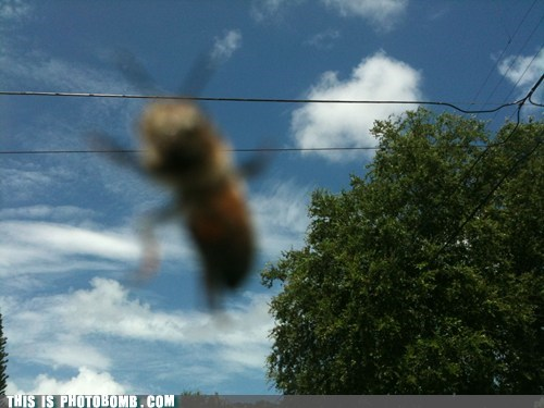 accident animal awesome bee blurry crazy nature - 5467242752