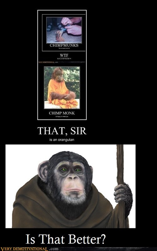 animals apes chimp hilarious monk - 5467396096