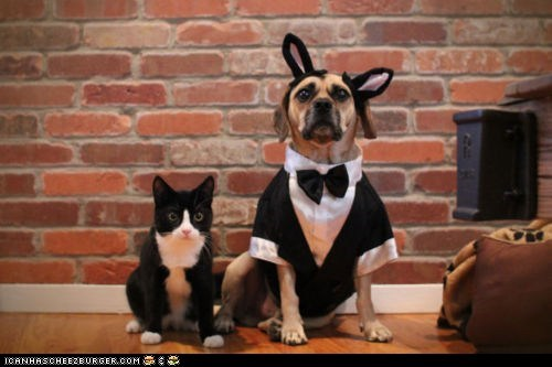 costume,dogs,dressed up,fancy,goggies,goggies r owr friends,Interspecies Love,tuxedos