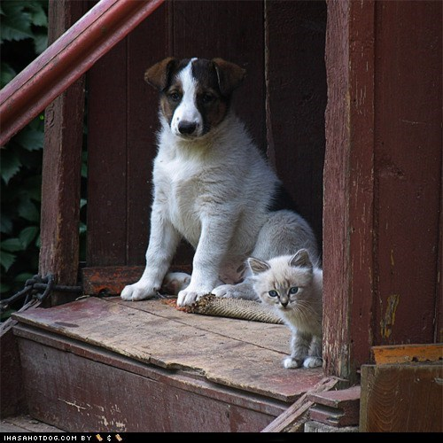 Cats,interspecies friendship,Interspecies Love,kittehs,kittehs r owr friends,porch