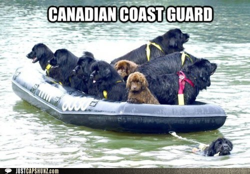 awesome Canada canadian dogs i has a hotdog newfie newfoundland - 5467812096