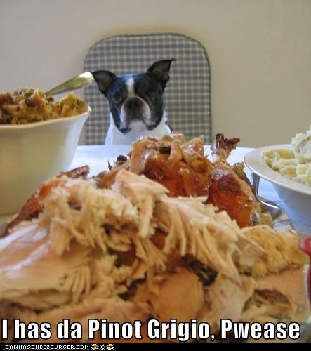 alcohol,best of the week,boston terrier,drinking,Hall of Fame,happy thanksgiving,pinot grigio,thanksgiving,Turkey,wine