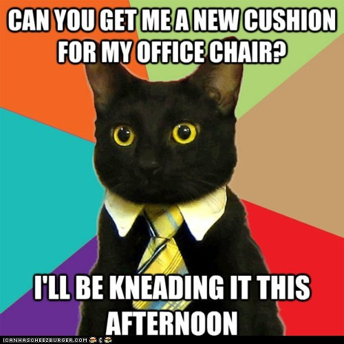 Business Cat,chairs,cushions,knead,kneading,memecats,Memes,need,puns