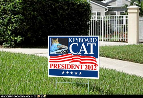 Keyboard Cat,Memes,politics,poll,president,presidential,vote,wtf