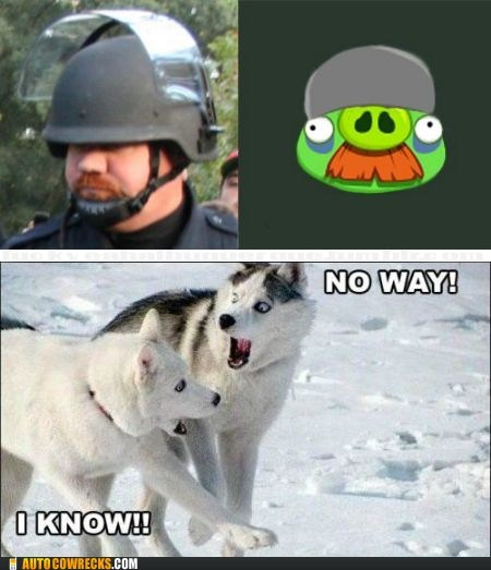 angry birds Hall of Fame pepper spray Pepper Spray Cop totally looks like - 5469276160