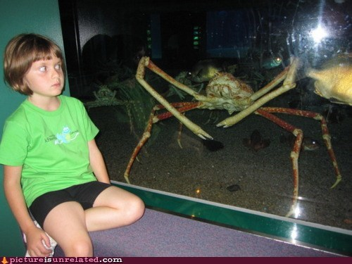 crab SOON underwater - 5469376256
