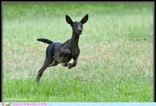 black coloring deer melanistic running unusual whatsit whatsit wednesday