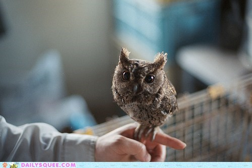 adorable,baby,bird of prey,falcon,falconer,finger,Hall of Fame,imitating,imitation,itty bitty,Owl,owlet,perching,peregrine falcon,person,tiny