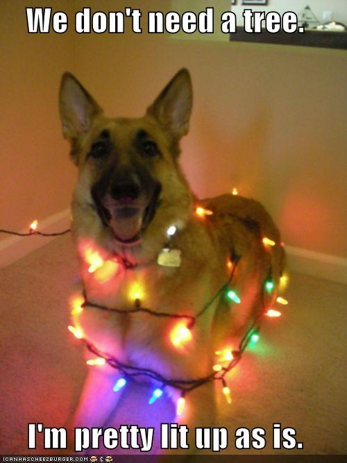 christmas lights,christmas tree,german shepherd,high,lit up,smiling