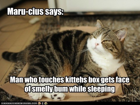 Maru-cius says: Man who touches kittehs box gets face of smelly bum while sleeping