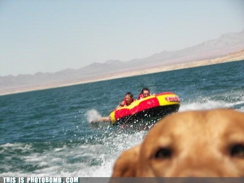 animal Animal Bomb center of attention dogs having fun - 5470064128