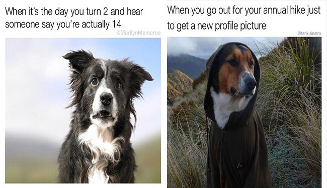 dogs dog memes funny memes Memes animal memes animals - 5470981