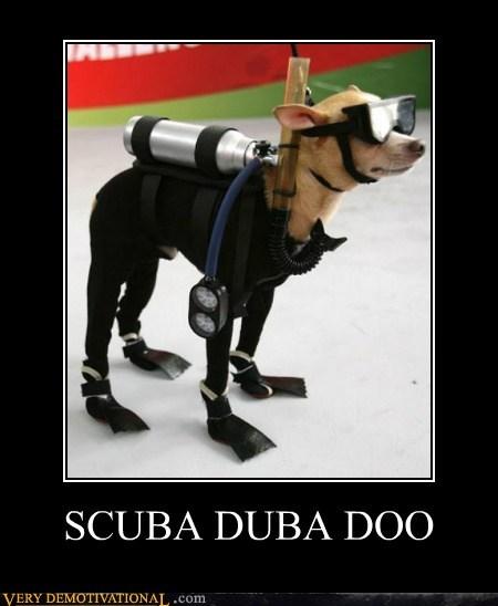 dogs,hilarious,scuba,scuba duba doo,wtf