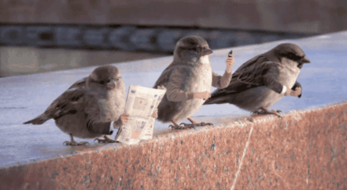 if birds had arms gifs