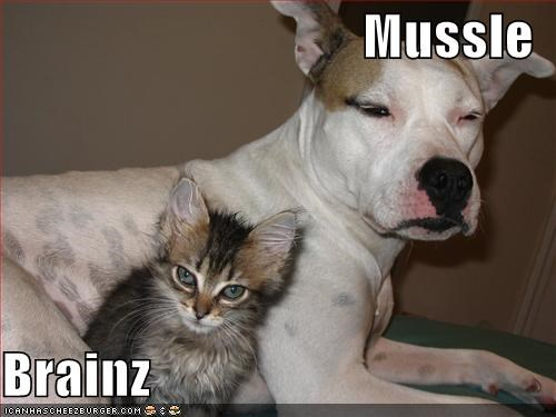 brains dogs kitten lolcats loldogs lolkittehs muscle - 547137280