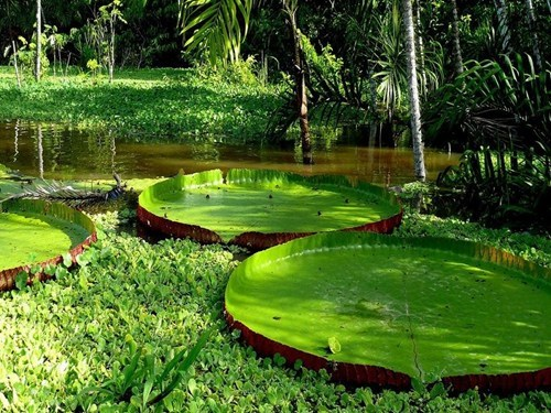 getaways green lily pad lily pads unknown location user submitted - 5471950848