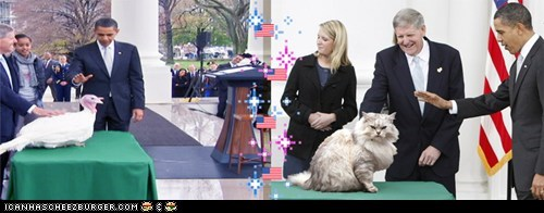 annual,cat,Cats,ceremony,george w bush,jfk,obama,pardoning the turkey,Pundit Kitchen,reagan,transformation,transforming,Turkey