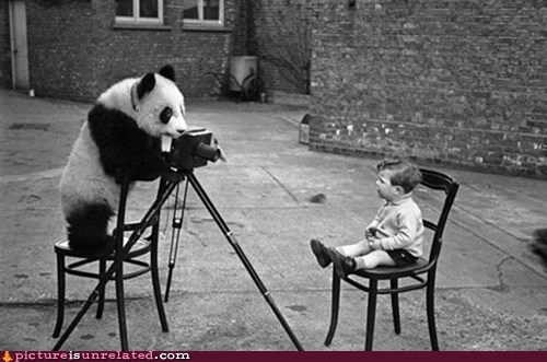 panda photography say cheese wtf