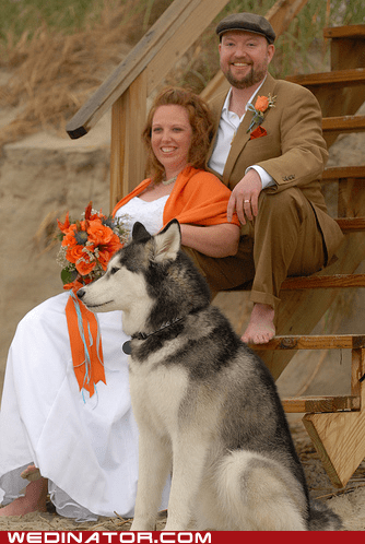 autumn bride dogs funny wedding photos groom thanksgiving - 5472127744