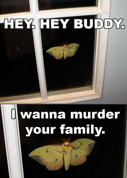 bug,burn it with fire,disgusting,GET IT AWAY,giant insect,go away,gross,murder,no,wtf,wtf is that