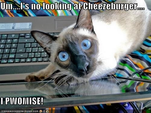 Cheezburger Image 5472668928