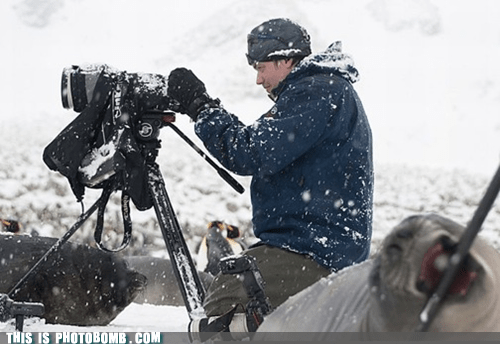 Animal Bomb,awesome,cameras,national geographic,nature,penguins,seals