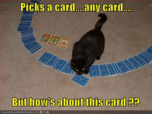 any caption captioned card cards cat deck magic pick recommendation rigging selecting suggestion this trick