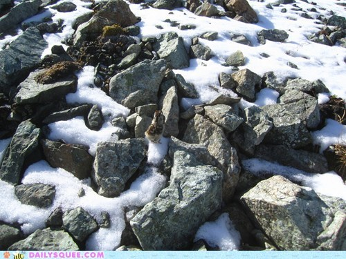 baby,chick,comparison,drink,idiom,on,ptarmigan,pun,rocks,squee spree,standing,tiny