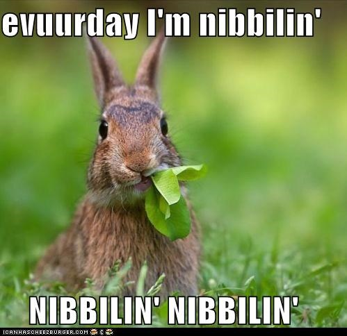 animals,best of the week,bunnies,bunny,caption,captioned,eating,every day,everyday im shufflin,grass,greens,leafs,Memes,nibblin,nibbling,rabbit,rabbits