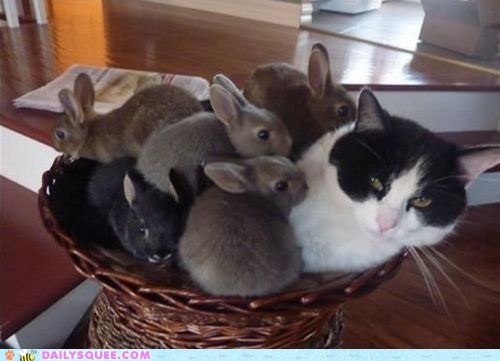 acting like animals bunnies bunny cat covering do not want happy bunday joke pile pun rabbit rabbits unhappy upset - 5473350144
