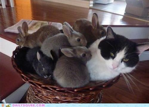 acting like animals bunnies bunny cat covering do not want happy bunday joke pile pun rabbit rabbits unhappy upset - 5473350144
