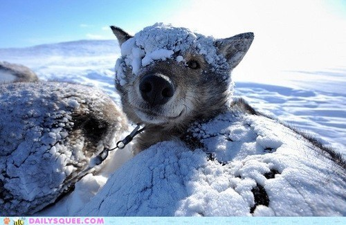 acting like animals buried dogs excited hide and seek hiding hiding place popping out snow surprise surprised - 5473427968