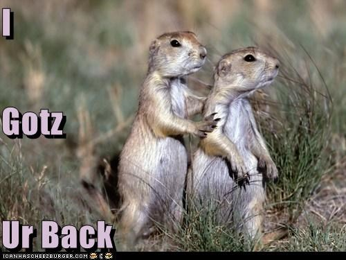animals defender got your back squirrels - 5473476096