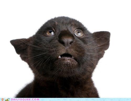 afraid baby cub fear jaguar shocked shy - 5473714944