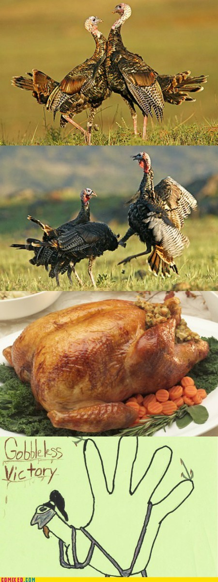 a memebase thanksgiving animals bird Mortal Kombat - 5473769728