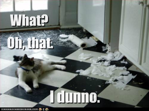 caption,captioned,cat,denial,excuse,i dunno,mess,not sure,paper towel,shredded,shreds,unclear,what