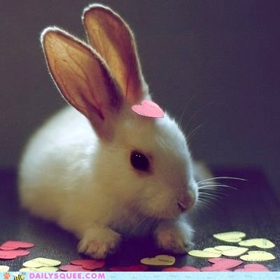 bunny,happy bunday,heart,heart on sleeve,idiom,love,rabbit,shape,sharing,spreading,wearing