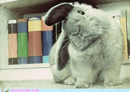 book books bunny confused flowers happy bunday knowledge lolwut power rabbit reading superior taste - 5473873920