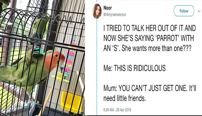 twitter secret mission birds cute tweets funny - 5474309