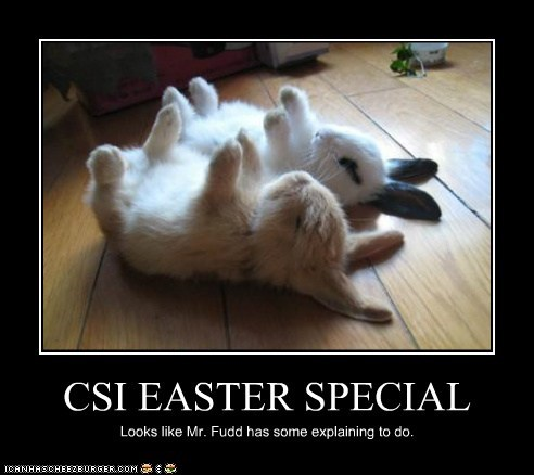 CSI EASTER SPECIAL Looks like Mr. Fudd has some explaining to do.