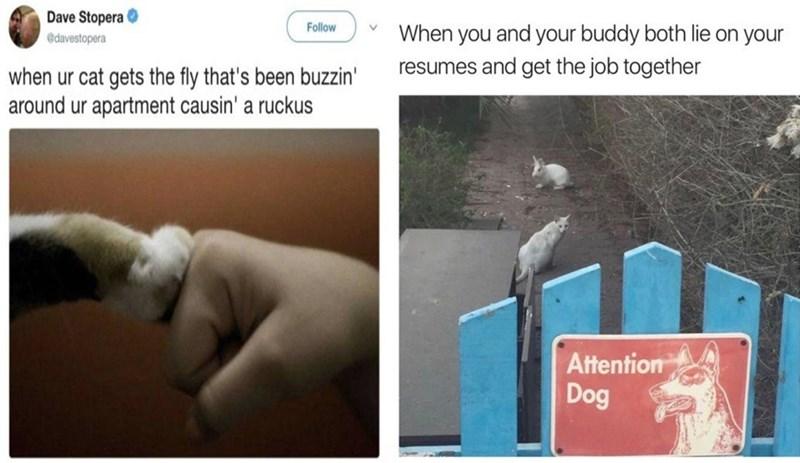 dog memes funny memes Memes mondays animal memes animals cat memes - 5474565