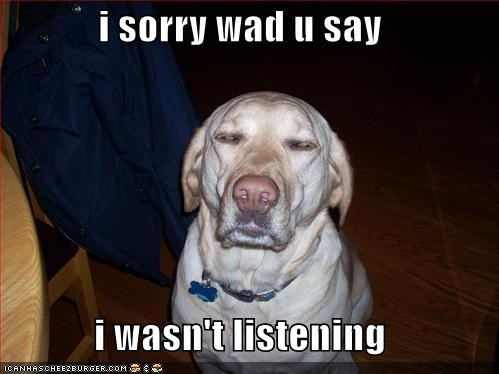 blah blah blah,boring,golden retriever,not listening,stopped listening
