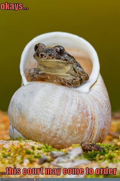 animals court frog judge shell - 5475561984