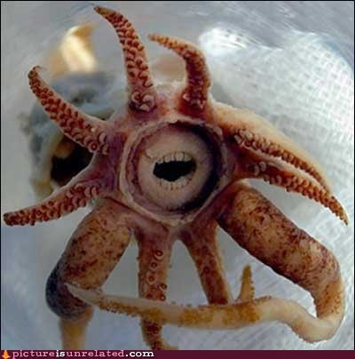 squid,teeth,wtf