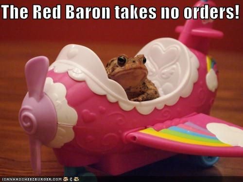 animals,flight,flying,frog,orders,plane,red baron