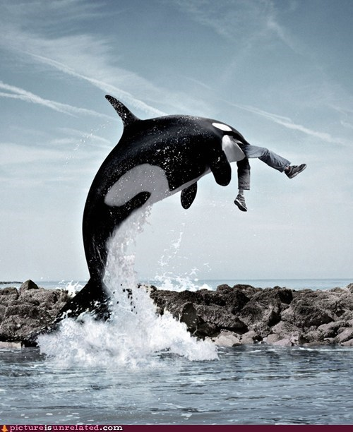 free willy whale wtf - 5476223488