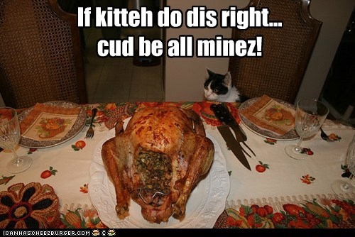 If kitteh do dis right... cud be all minez!